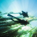 PADI Digital Underwater Photography Specialty - Cape Town V-A Waterfront - Ocean Experiences