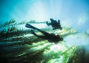 PADI Digital Underwater Photography Specialty – Cape Town V-A Waterfront – Ocean Experiences